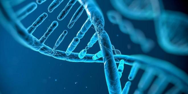"""Képtalálat a következőre: """"génjeinkről képek"""""""